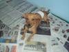 Mutirão de Castração Abril/2012