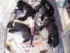 Mutirão de Castração Fevereiro/2012