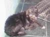 Mutirão de Castração Junho/2012