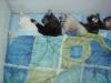 Mutirão de Castração Maio/2012