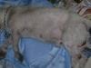 Mutirão de Castração Março/2012