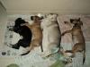 Mutirão especial - Castração de gatos ariscos - Maio/2014