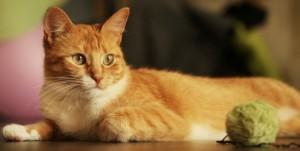 gato-laranja-deitado-14431