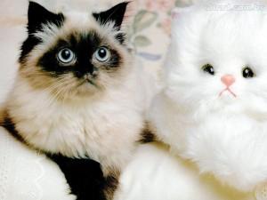 gato_urso