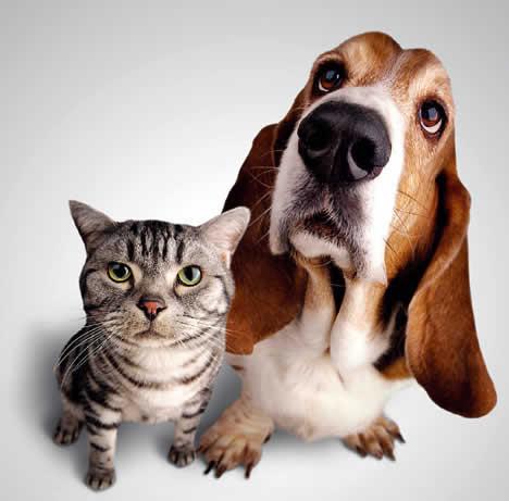 pet-rede-cachorro-gato-olhar