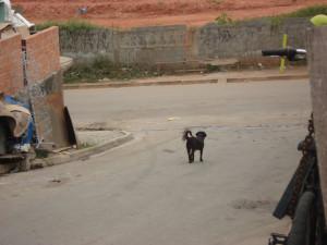 Muitos animais possuem donos, mas ficam soltos nas ruas.