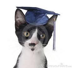 gato inteligente