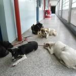 Cães morador de rua Sr.Jose