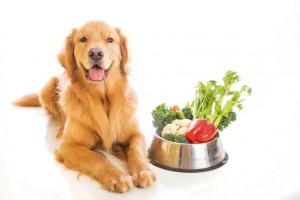 retriver comida natural