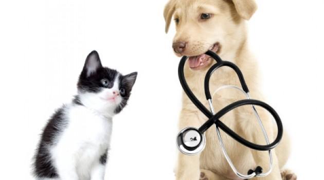 cao e gato estetoscopio