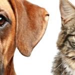 rosto cao e gato