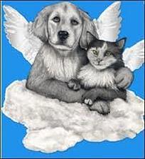 gato e cao anjos